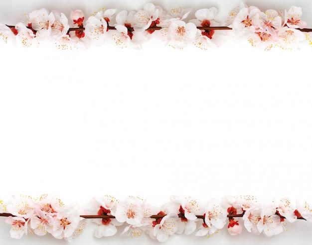 Feld von kirschblüte auf weißem hintergrund