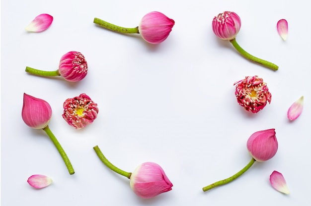 Feld von rosafarbenen lotosblumen auf weiß