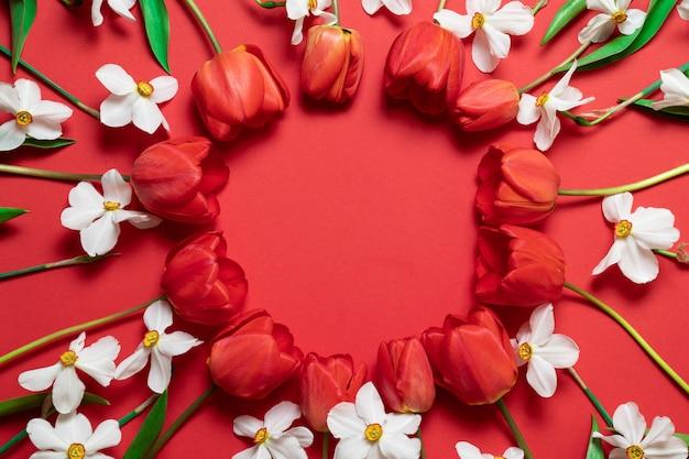 Feld von schönen roten tulpen und von narzissenblumen auf rot