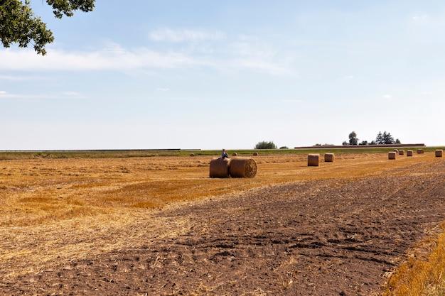 Feldanbau und bewölkter himmel