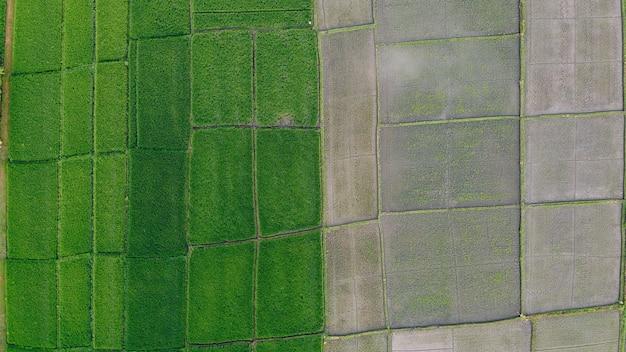 Felder in bali werden von einer drohne aus fotografiert