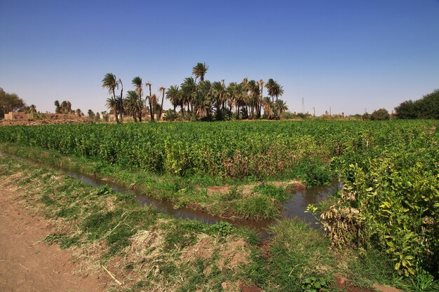 Felder in dem kleinen dorf am nil, sudan