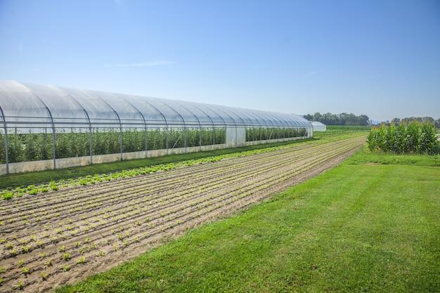 Felder und ein gewächshaus