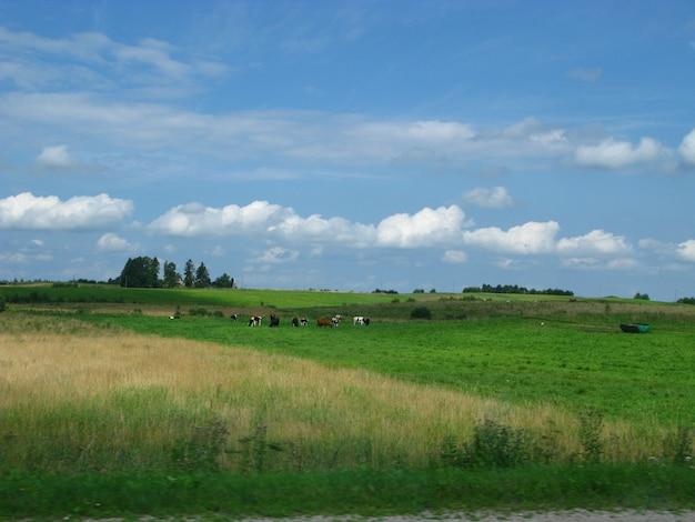 Felder und wälder in litauen