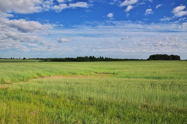 Felder und wald in belarus-land