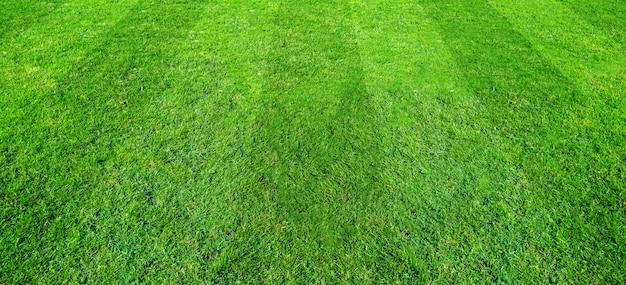 Feldhintergrundmuster des grünen grases für fußball- und fußballsport. grüner rasenbeschaffenheitshintergrund.