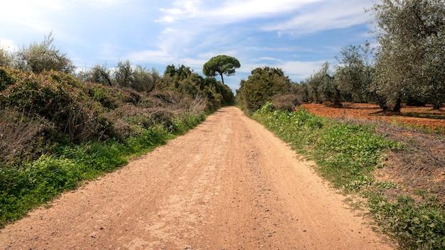 Feldweg und wanderweg zwischen weizenfeld und landschaft