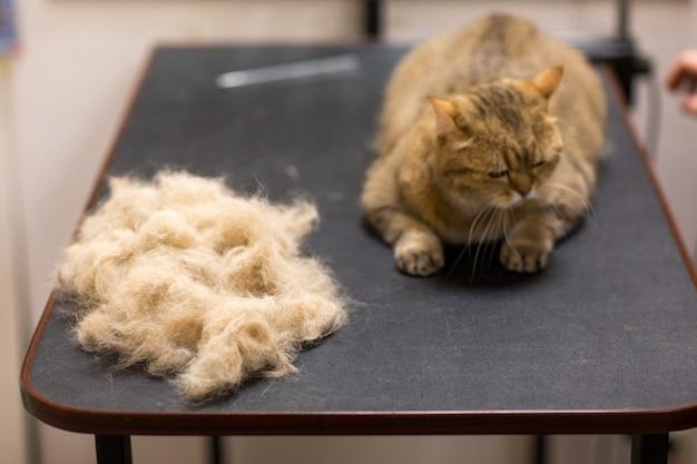 Fellpflege für katzen und haustiere im schönheitssalon