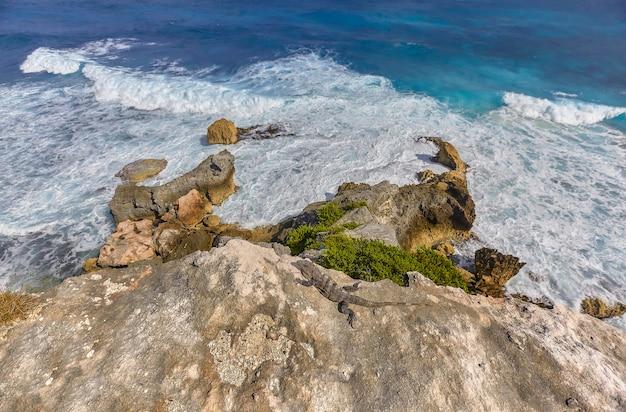 Felsen, die auf der isla mujeres in mexiko zum meer reichen