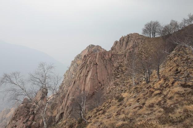 Felsen getrocknetes gras und kühne bäume während des tages