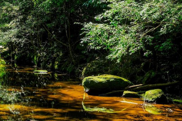 Felsen mit moos im strom im tropischen regenwald