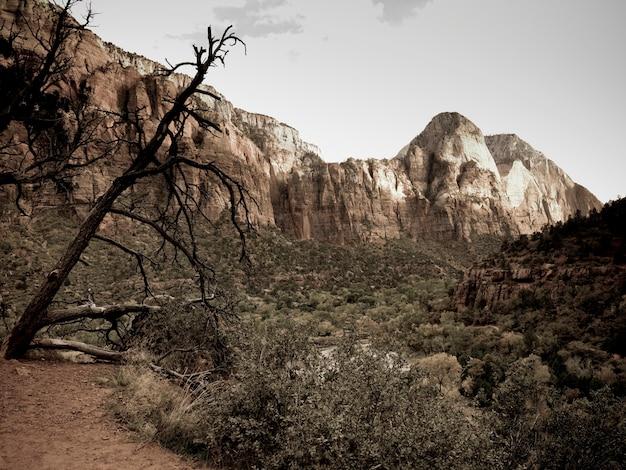 Felsformationen in einem nationalpark, zion national park, utah, usa