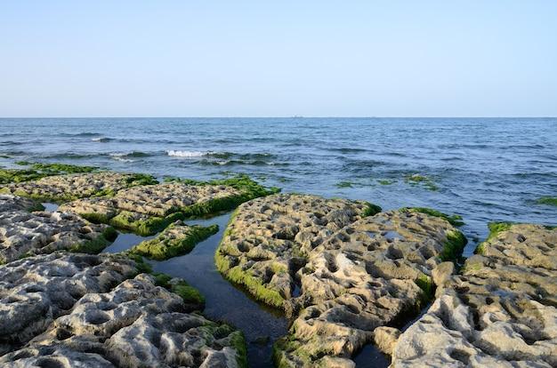 Felsküste des kaspischen meeres mit algen bedeckt
