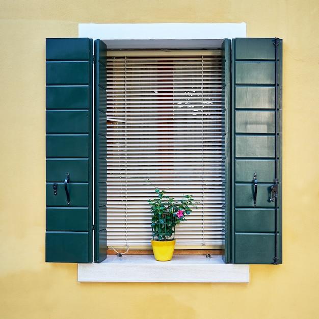 Fenster mit grünen fensterläden und blumen im topf. italien, venedig, burano