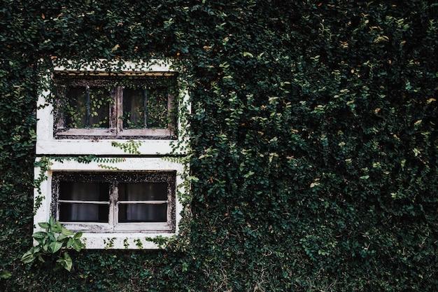 Fenster mit grüner blätterwandbeschaffenheit