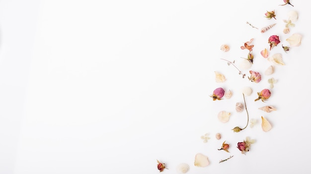 Festliche blumenkomposition. rahmen aus getrockneten rosenblüten, muscheln, band auf weißem hintergrund. draufsicht von oben, flach. platz kopieren. geburtstag, mutter, valentinstag, frauen, hochzeitstag konzept