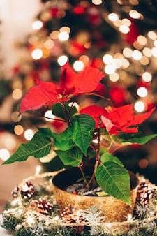 Festliche dekoration mit roten künstlichen poinsettiablumen als weihnachtssymbol und beleuchteter girlande auf bokeh