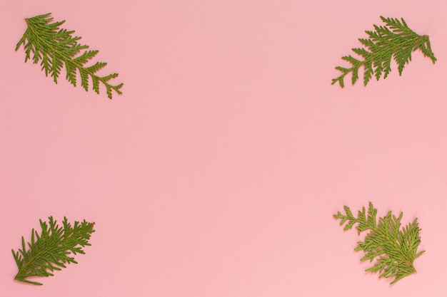 Festlicher weihnachtshintergrund, tannenzweige auf rosa hintergrund, flache lage, draufsicht