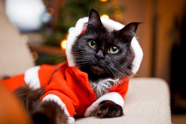 Festliches porträt der schwarzen katze im weihnachtsmannkostüm auf sessel mit weihnachtsbaum