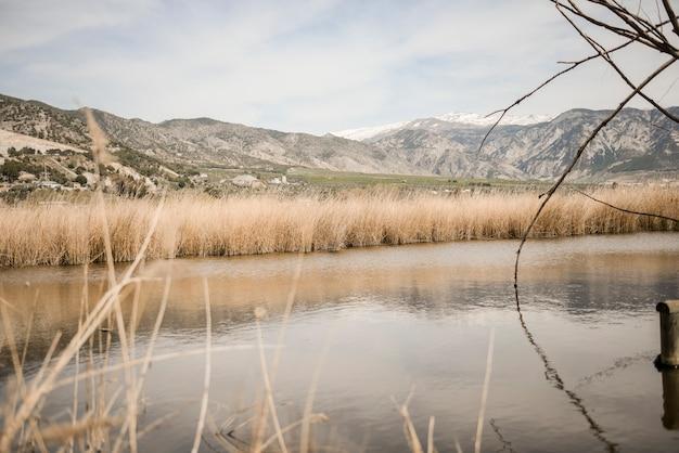 Feuchtgebiete mit sumpfvegetation in mammutweg in padul, granada, andalusien, spanien