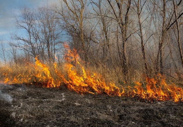 Feuer auf der kontrastierenden landschaft des flusses