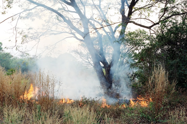 Feuer auf trockenem gras und bäumen
