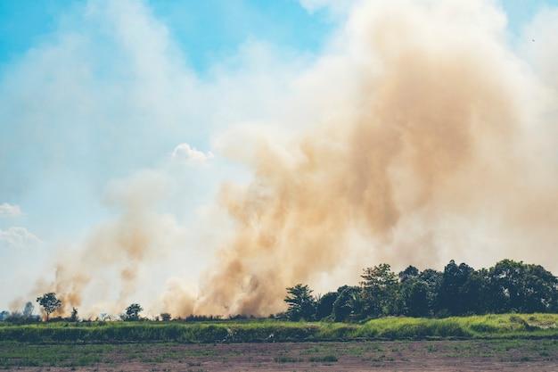 Feuer, das im reisfeld brennt