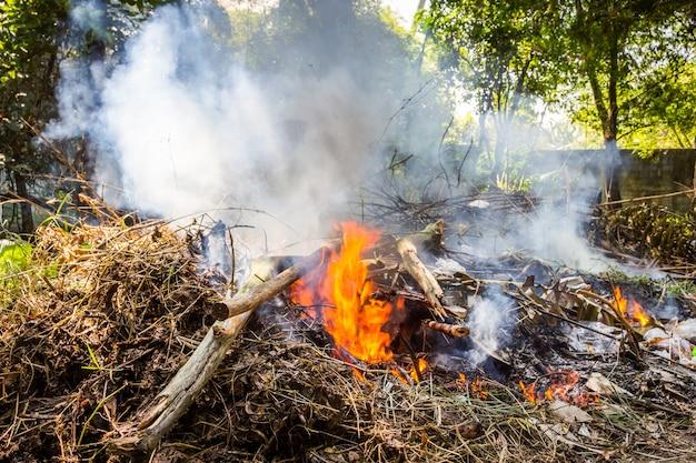 Feuer, das trockene baumaste brennt