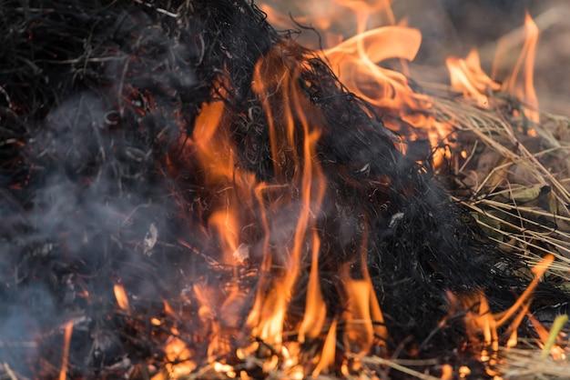 Feuer, das trockenes gras es gefahr für umwelt brennt