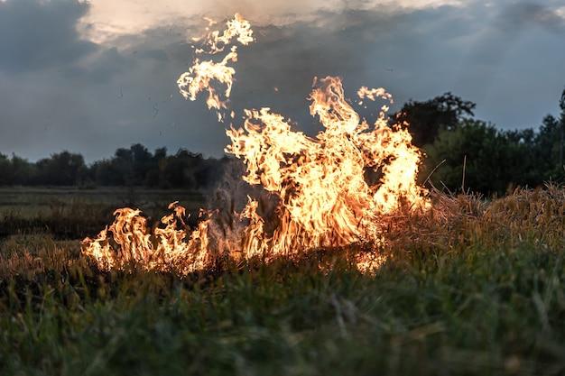 Feuer in der steppe, das gras brennt und zerstört alles, was ihm in den weg kommt.