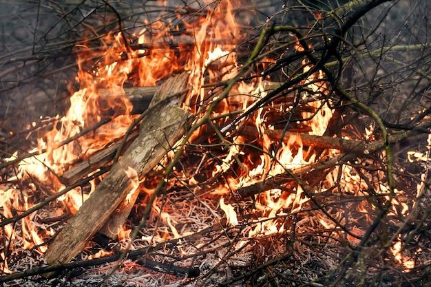 Feuer von einem alten, letztjährigen gras, trockenen ästen und müll. feuer und rauch in einer waldplantage