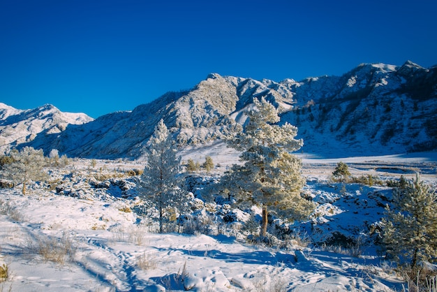 Fichte und kiefern bedeckt mit schnee auf dem hintergrund der schneebedeckten berghänge und des strahlend blauen himmels an einem sonnigen wintertag. atemberaubende aussicht auf die bergkette. eine weihnachtsgeschichte in den alpen.