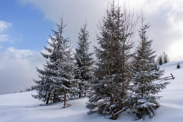 Fichtengebirgswald mit schnee bedeckt.