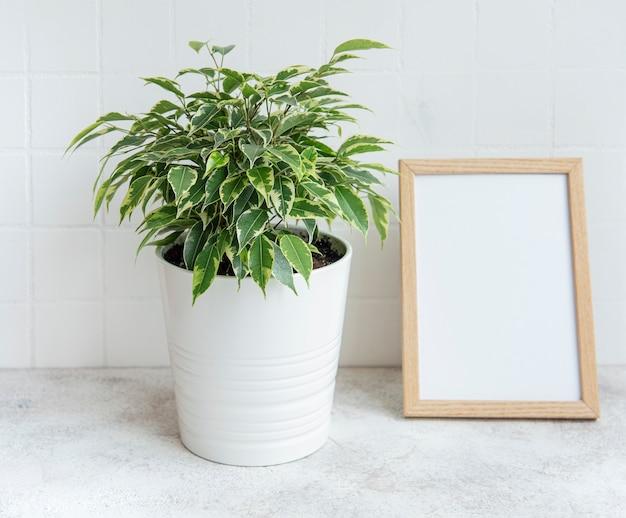 Ficus benjamin und mock up posterrahmen auf dem tisch