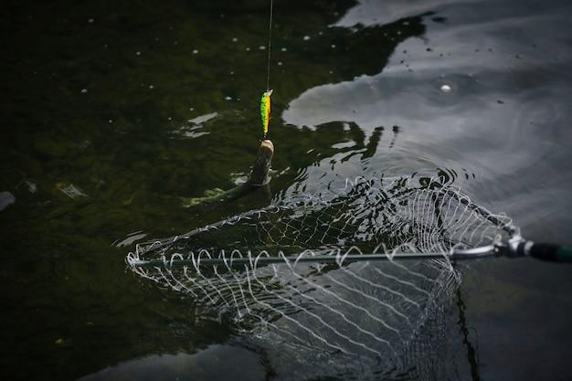 Fisch an einem haken im fangnetz gefangen