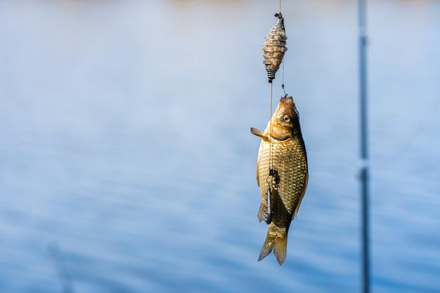 Fisch an einem haken
