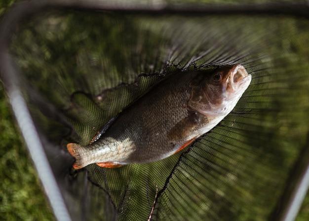 Fisch auf einem fischnetz gefangen