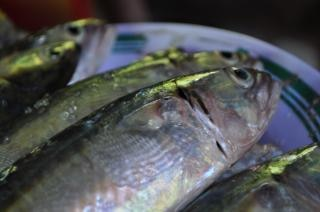 Fisch auf einer platte, waagen