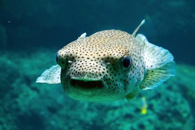 Fisch im aquarium, meeresleben, unter wasser, grüne farben, naturtiere, schwimmen im salzwasser.