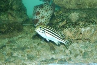 Fisch in surabaya zoo, flossen