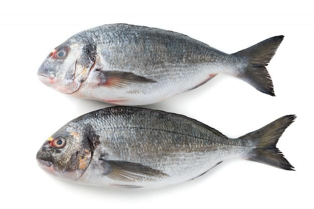Fisch isoliert auf einer weißen oberfläche