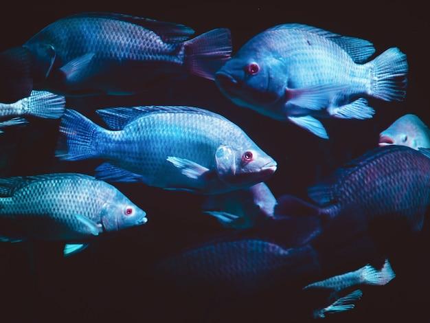 Fisch mit schwarzlicht neon