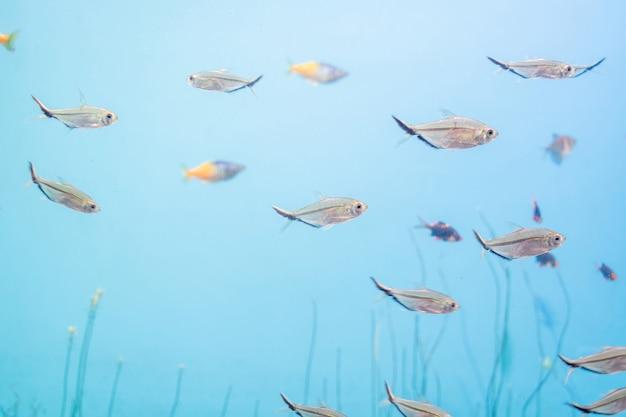 Fisch und landschaft im aquarium