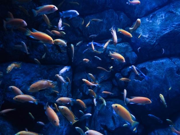 Fischbewohner der meerestiefen im meer, schöne fische, meerestauchen.