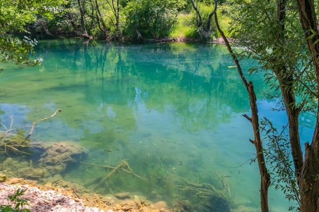 Fische schwimmen in klarem türkisfarbenem wasser.