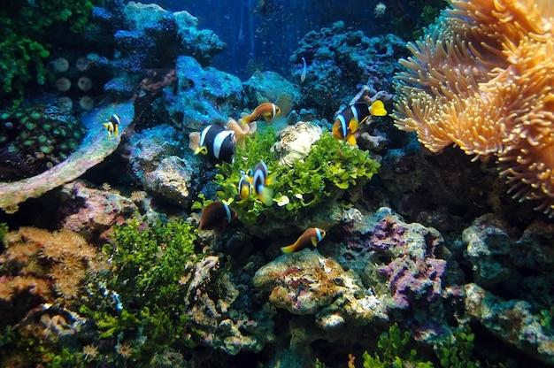 Fische schwimmen