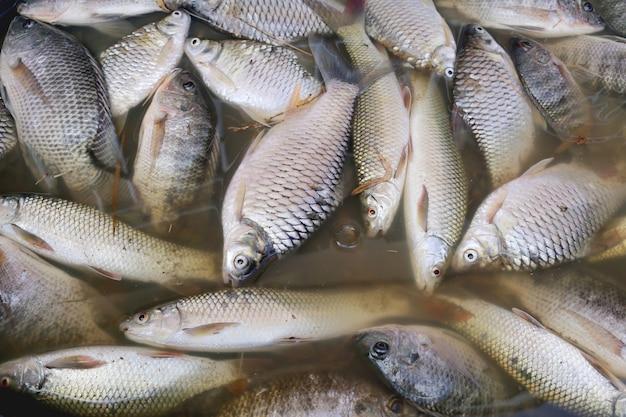 Fische starben, weil abwasser.