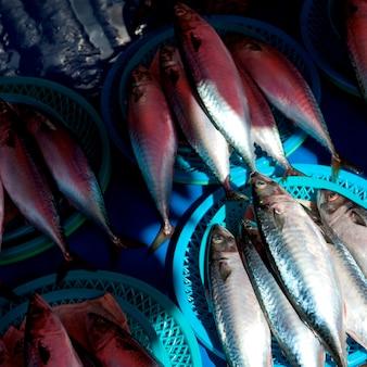 Fischen sie an einem strömungsabriß in einem fischmarkt, busan, yeongnam, südkorea