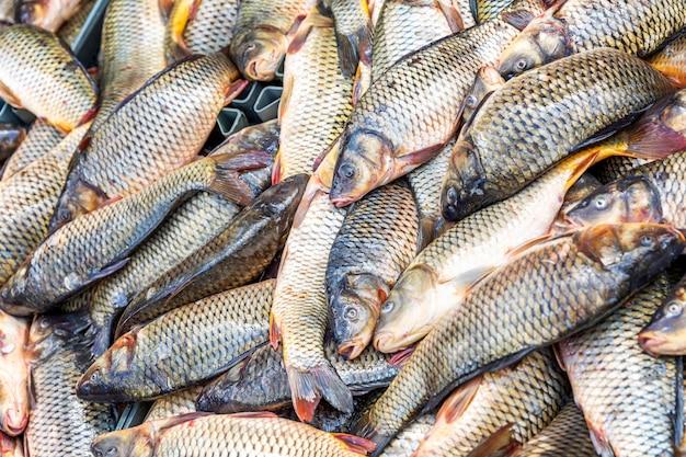 Fischen sie auf der theke im markt. hintergrund. platz für text.