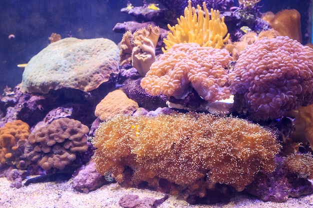 Fischen sie im aquarium